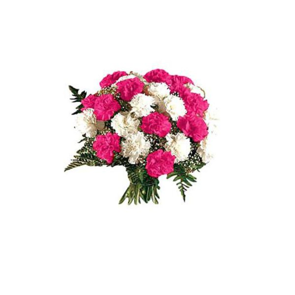 20 pink and white carnation  1