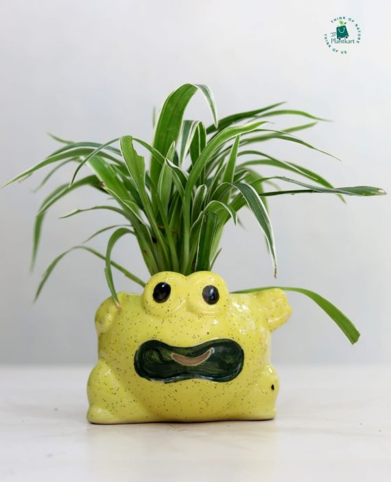 Spider Plant in Frog Pot