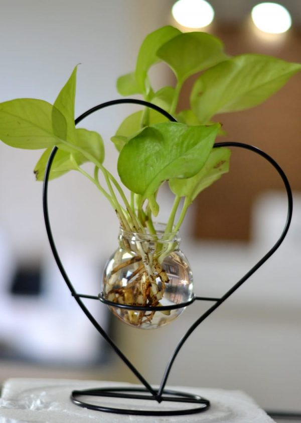 Mini_Money_plant_Terrarium_2