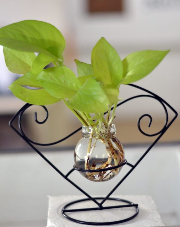 Mini_Money_plant_Terrarium_3
