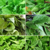 Leafy Seeds Combo Leafy Seeds Coombo