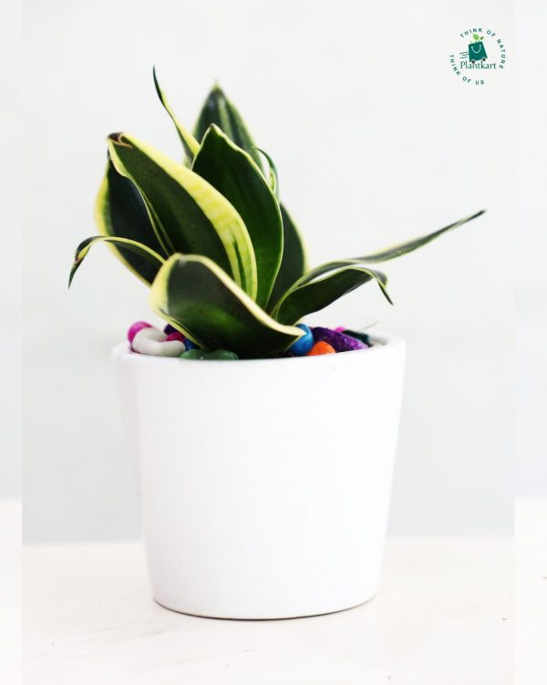 Snake_White_Ceramic_Planter_1